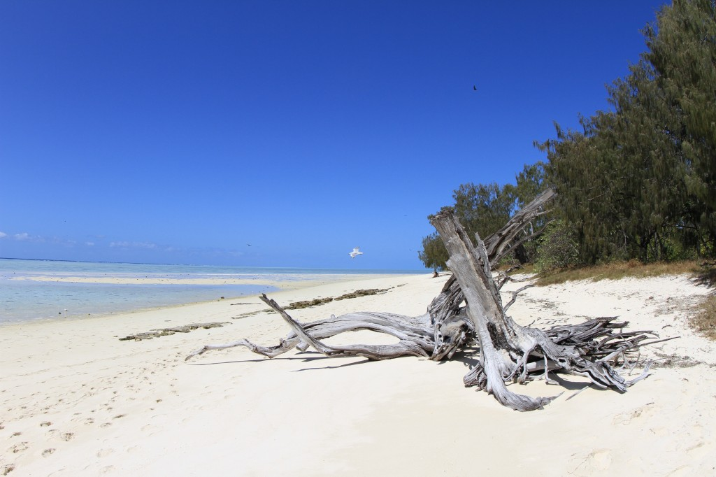 White Sands, Heron Island