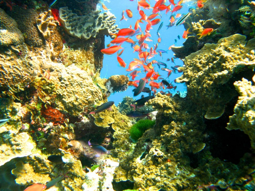 So Many fish and they are all beautiful!. The Great Barrier Reef, Queensland, Australia.